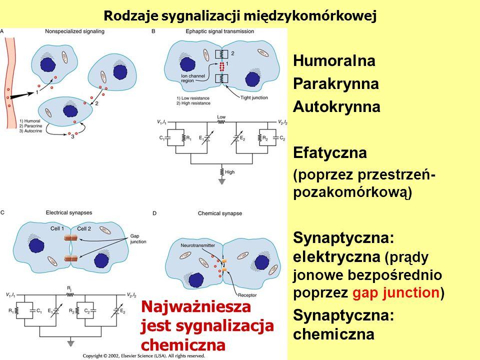 Rodzaje sygnalizacji międzykomórkowej