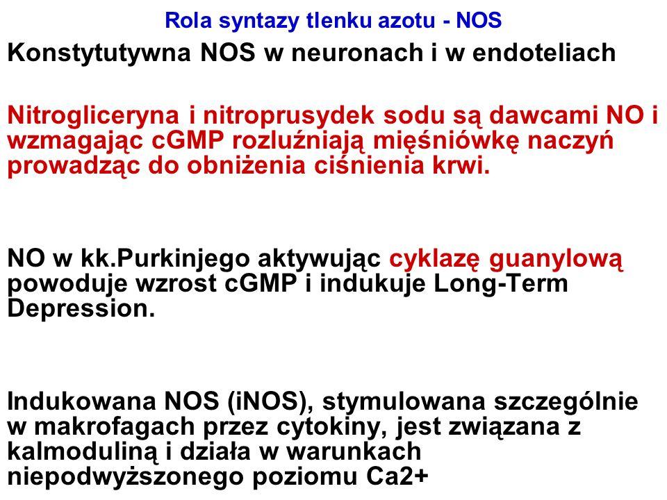 Rola syntazy tlenku azotu - NOS