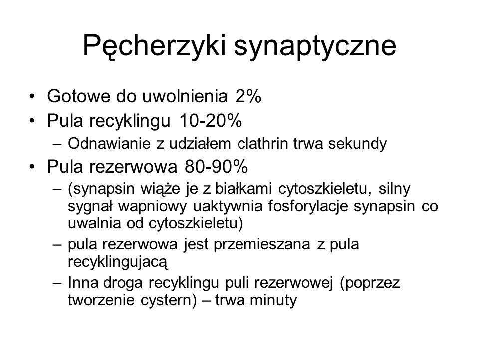 Pęcherzyki synaptyczne