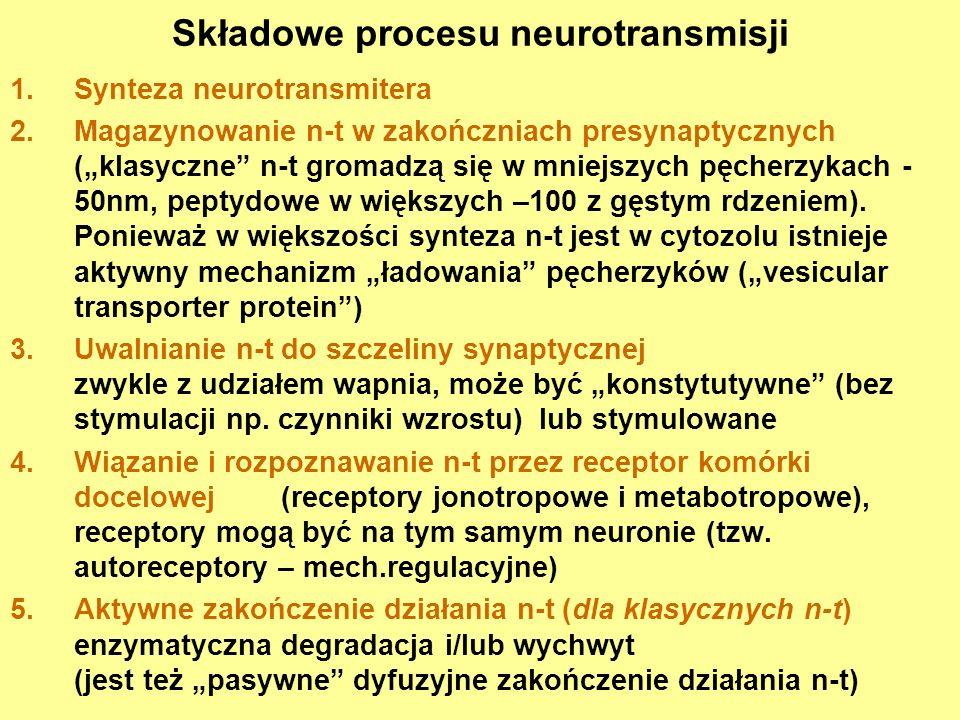 Składowe procesu neurotransmisji
