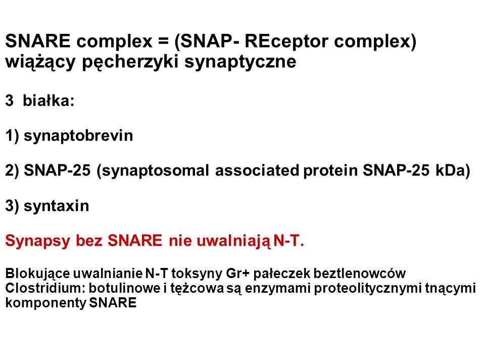SNARE complex = (SNAP- REceptor complex) wiążący pęcherzyki synaptyczne 3 białka: 1) synaptobrevin 2) SNAP-25 (synaptosomal associated protein SNAP-25 kDa) 3) syntaxin Synapsy bez SNARE nie uwalniają N-T.