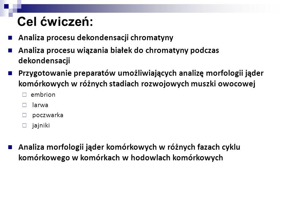 Cel ćwiczeń: Analiza procesu dekondensacji chromatyny
