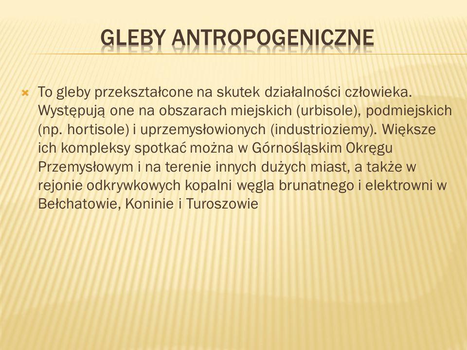 Gleby antropogeniczne