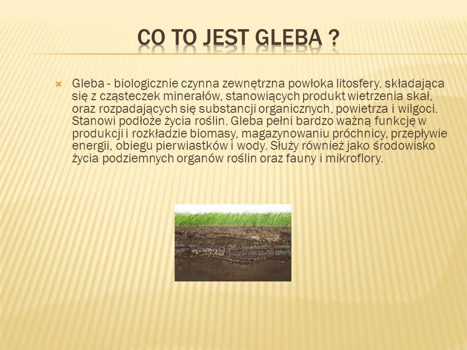 Co to jest gleba