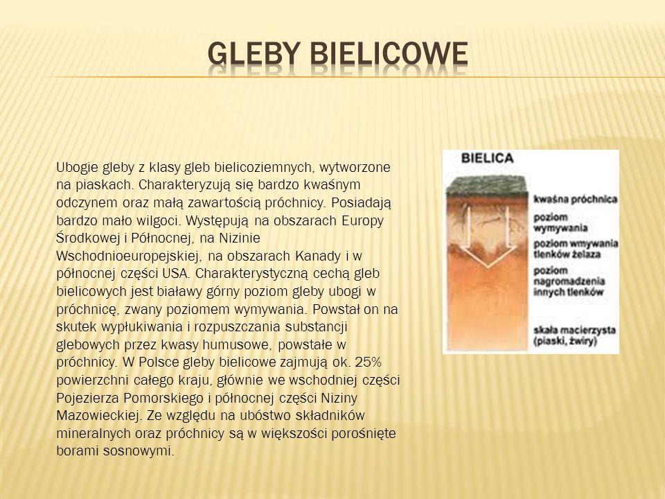 Gleby bielicowe