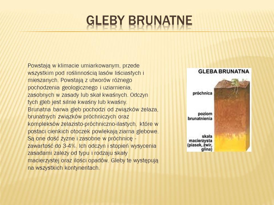 Gleby brunatne