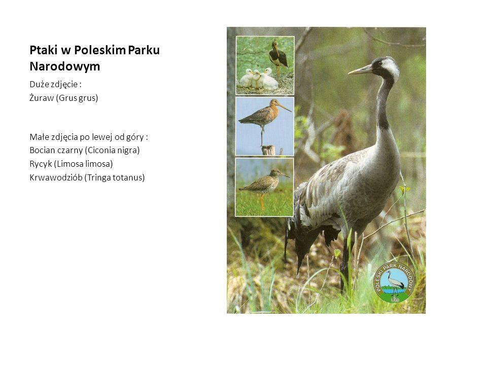 Ptaki w Poleskim Parku Narodowym