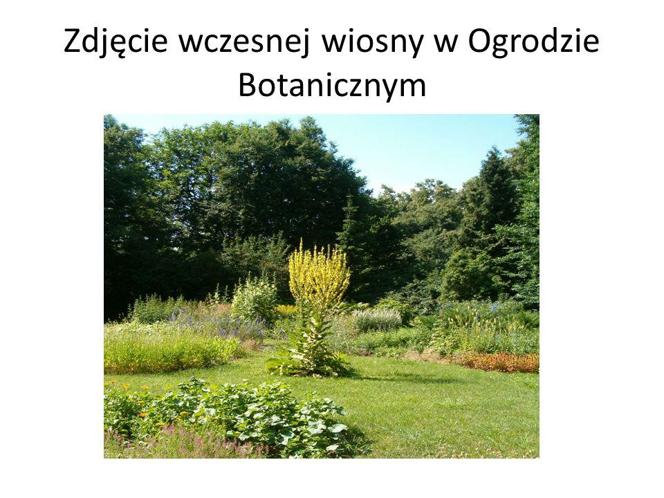 Zdjęcie wczesnej wiosny w Ogrodzie Botanicznym