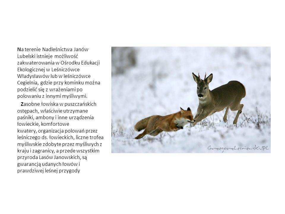 Na terenie Nadleśnictwa Janów Lubelski istnieje możliwość zakwaterowania w Ośrodku Edukacji Ekologicznej w Leśniczówce Władysławów lub w leśniczówce Cegielnia, gdzie przy kominku można podzielić się z wrażeniami po polowaniu z innymi myśliwymi.