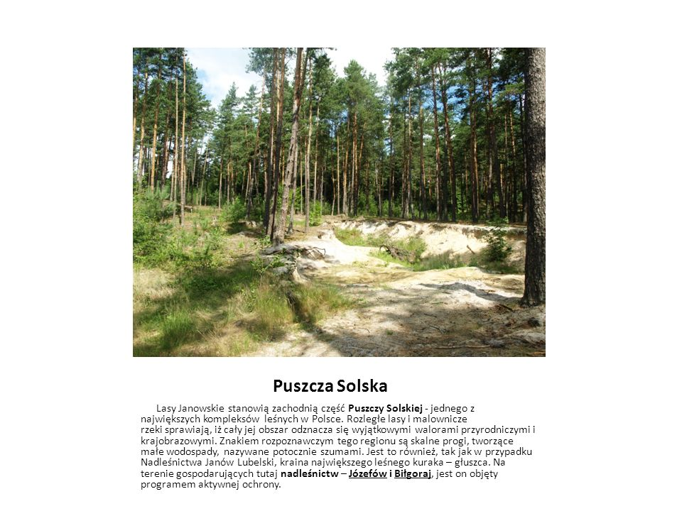Puszcza Solska