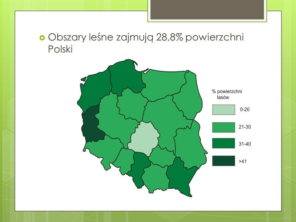 Obszary leśne zajmują 28,8% powierzchni Polski