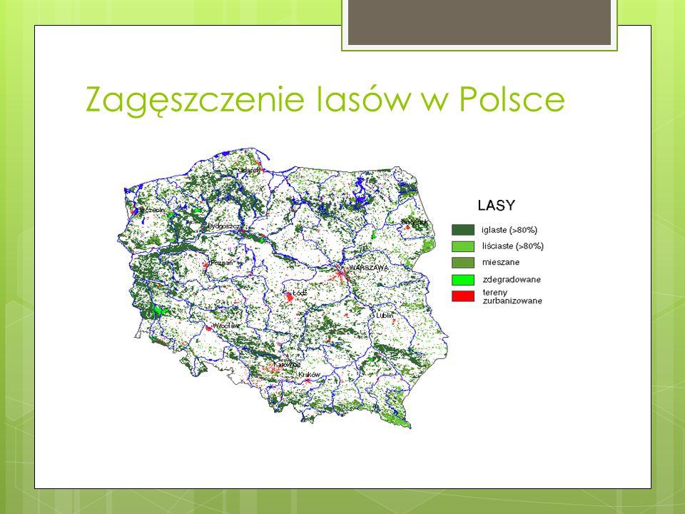 Zagęszczenie lasów w Polsce
