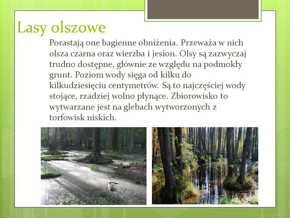 Lasy olszowe