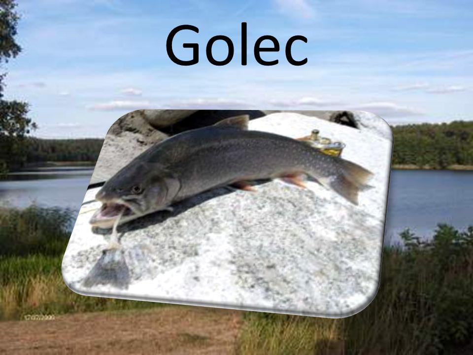 Golec