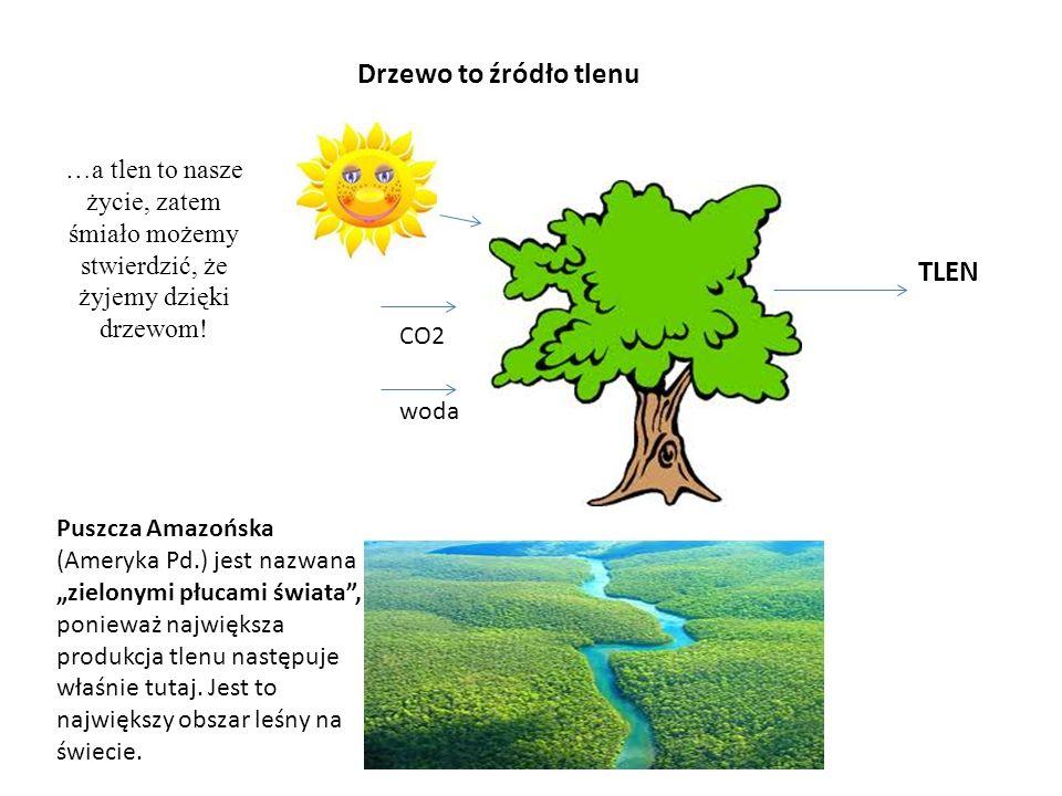Drzewo to źródło tlenu TLEN
