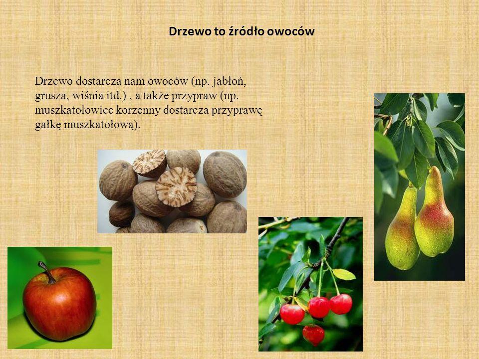 Drzewo to źródło owoców