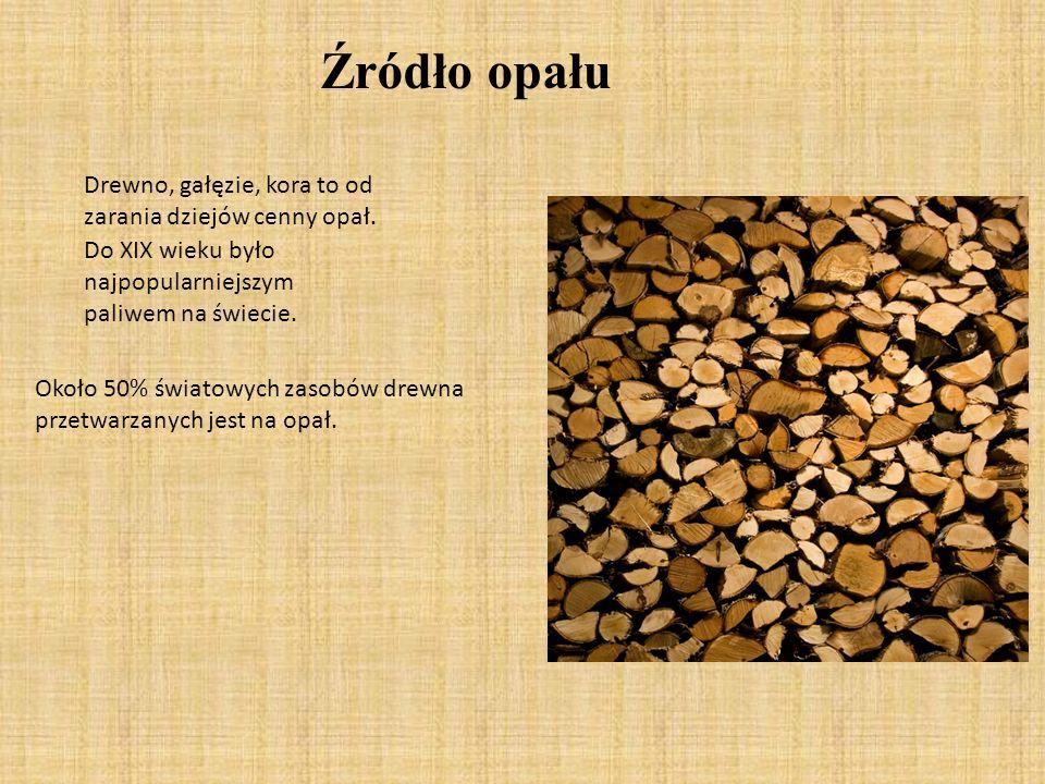 Źródło opału Drewno, gałęzie, kora to od zarania dziejów cenny opał.