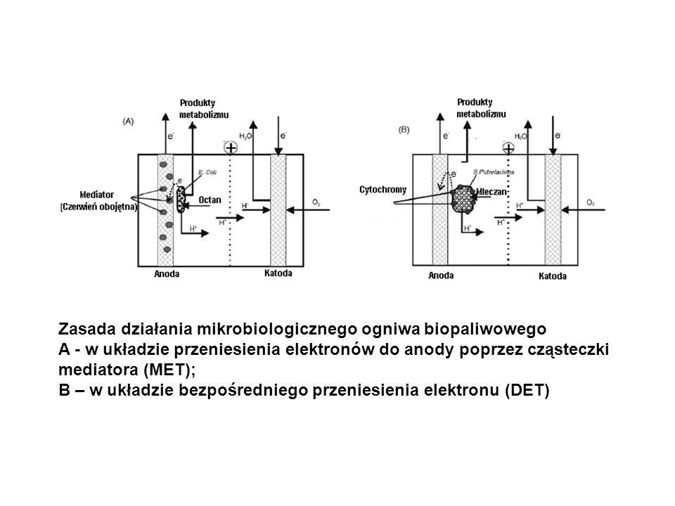 Zasada działania mikrobiologicznego ogniwa biopaliwowego