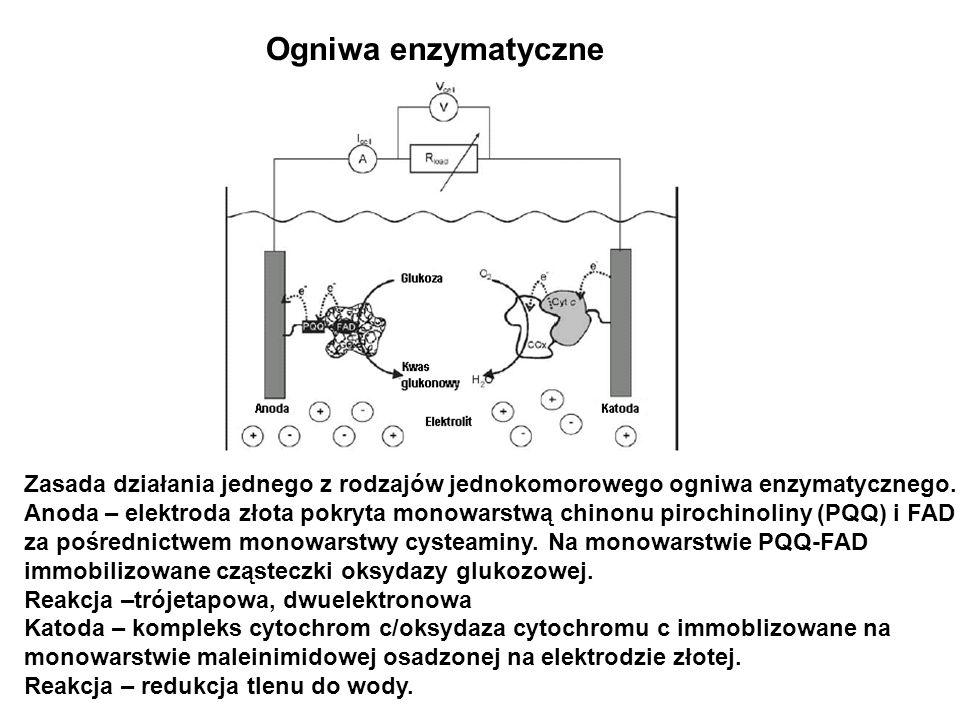 Ogniwa enzymatyczneZasada działania jednego z rodzajów jednokomorowego ogniwa enzymatycznego.
