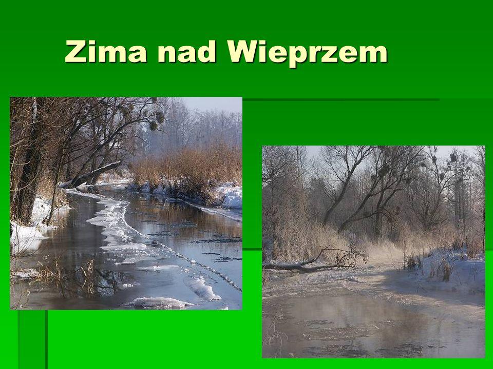 Zima nad Wieprzem
