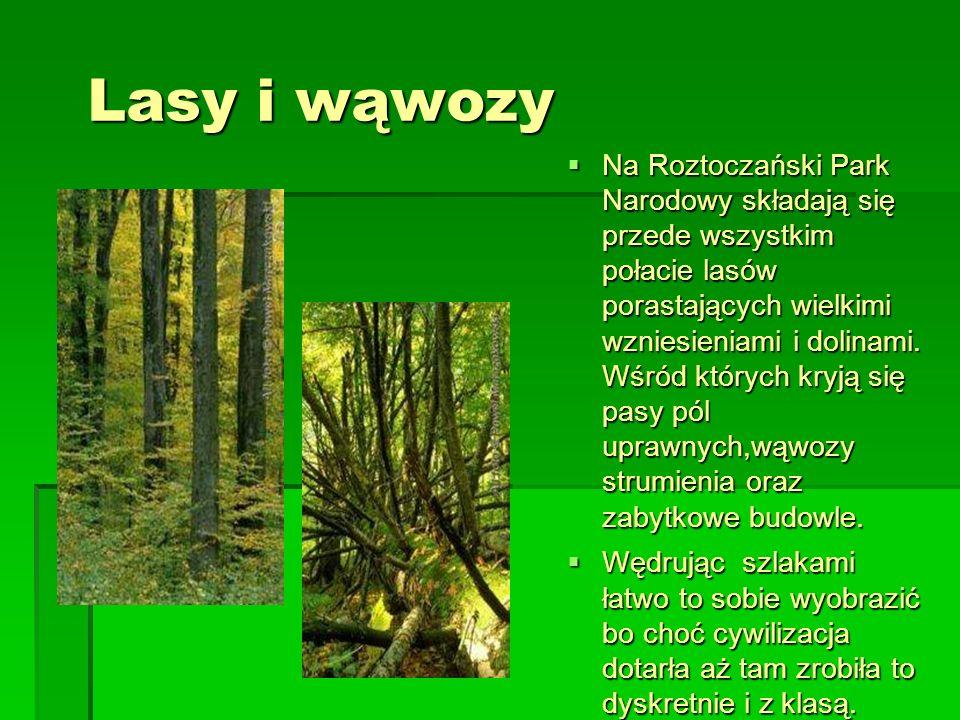 Lasy i wąwozy