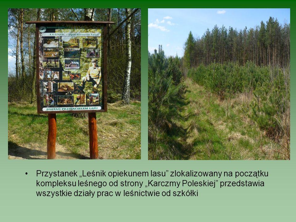 """Przystanek """"Leśnik opiekunem lasu zlokalizowany na początku kompleksu leśnego od strony """"Karczmy Poleskiej przedstawia wszystkie działy prac w leśnictwie od szkółki"""