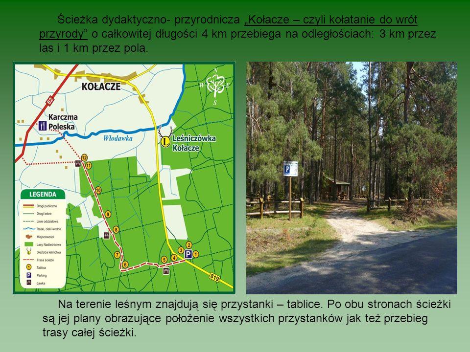"""Ścieżka dydaktyczno- przyrodnicza """"Kołacze – czyli kołatanie do wrót przyrody o całkowitej długości 4 km przebiega na odległościach: 3 km przez las i 1 km przez pola."""