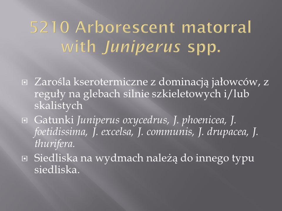 5210 Arborescent matorral with Juniperus spp.