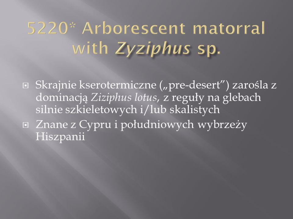 5220* Arborescent matorral with Zyziphus sp.