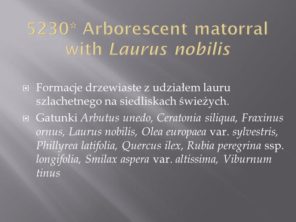 5230* Arborescent matorral with Laurus nobilis