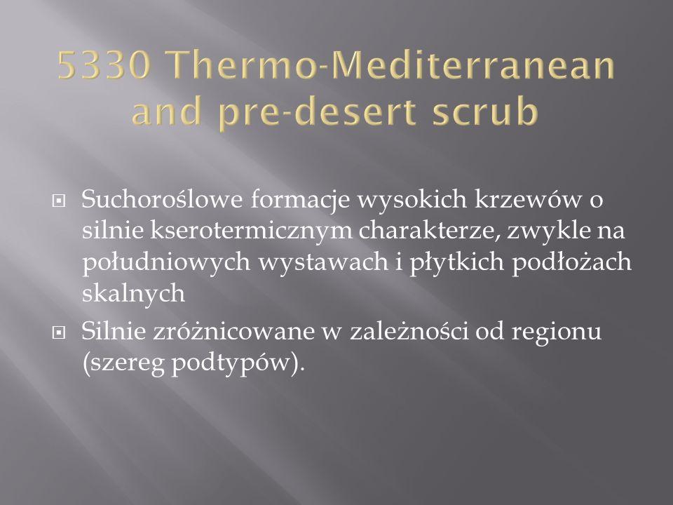 5330 Thermo-Mediterranean and pre-desert scrub