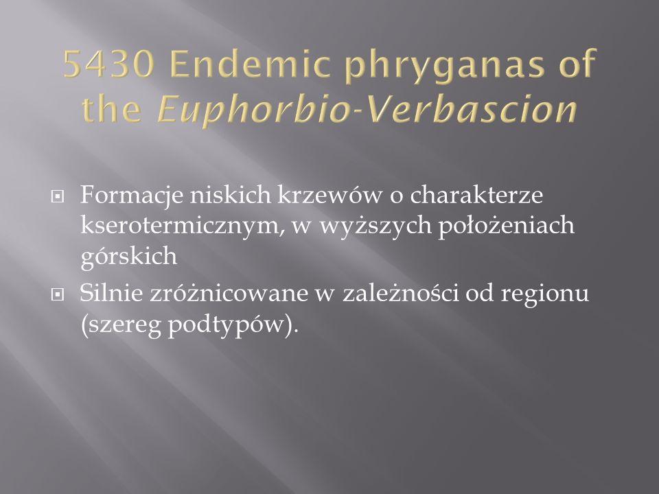5430 Endemic phryganas of the Euphorbio-Verbascion