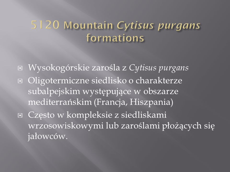 5120 Mountain Cytisus purgans formations