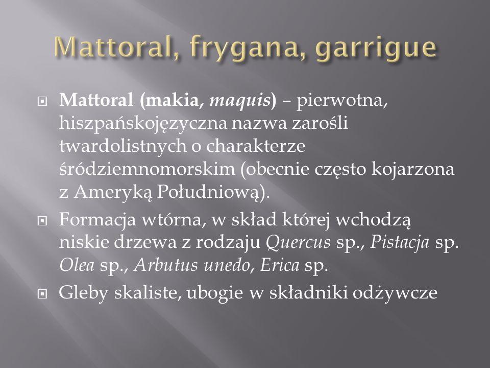 Mattoral, frygana, garrigue