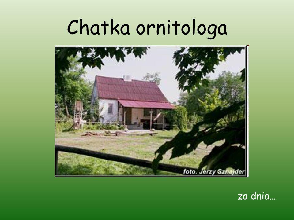 Chatka ornitologa za dnia…