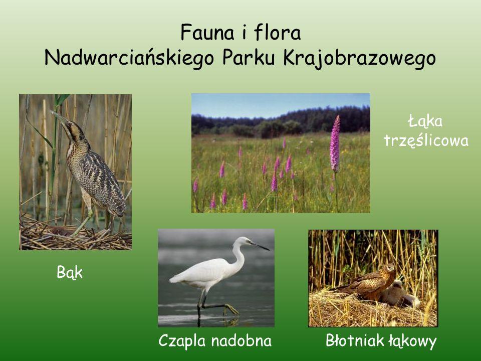 Fauna i flora Nadwarciańskiego Parku Krajobrazowego
