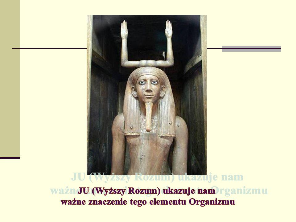 JU (Wyższy Rozum) ukazuje nam ważne znaczenie tego elementu Organizmu