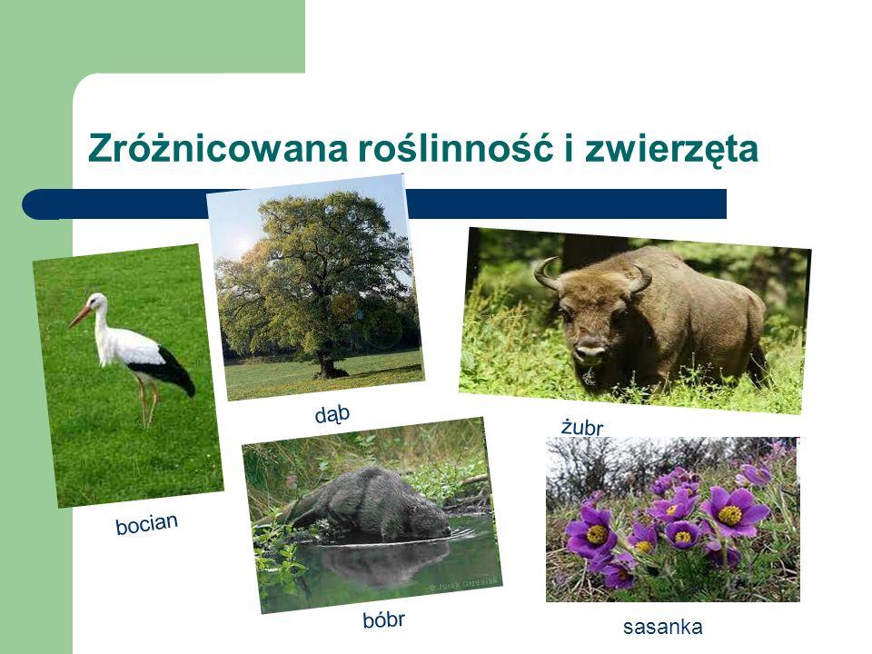 Zróżnicowana roślinność i zwierzęta