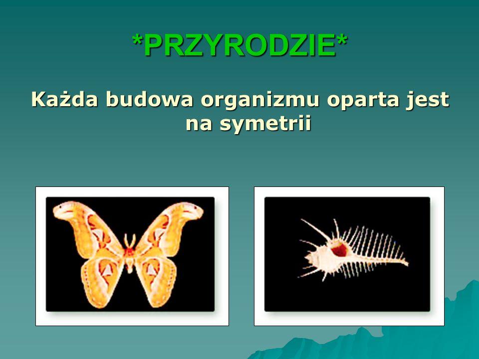 Każda budowa organizmu oparta jest na symetrii