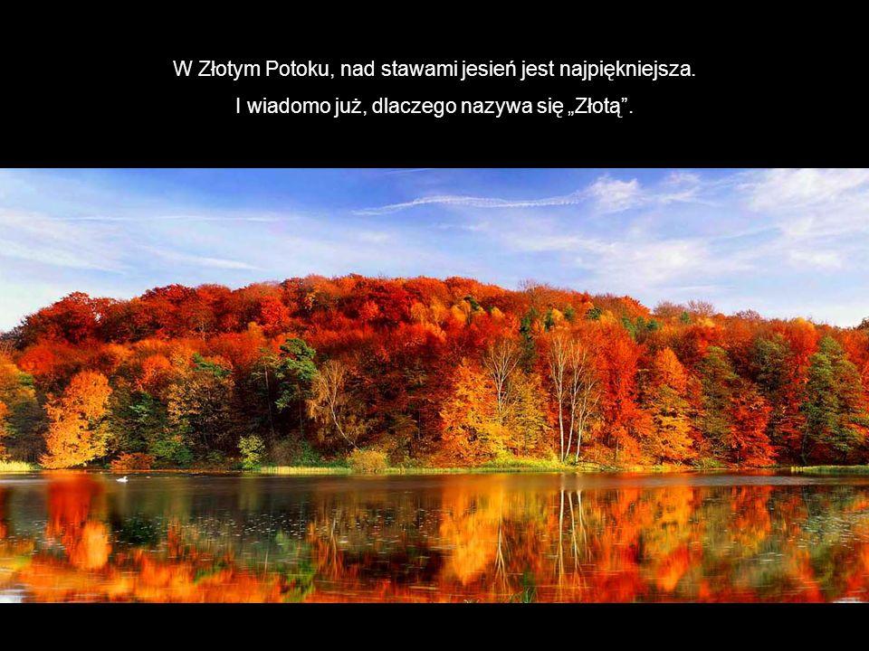 W Złotym Potoku, nad stawami jesień jest najpiękniejsza.