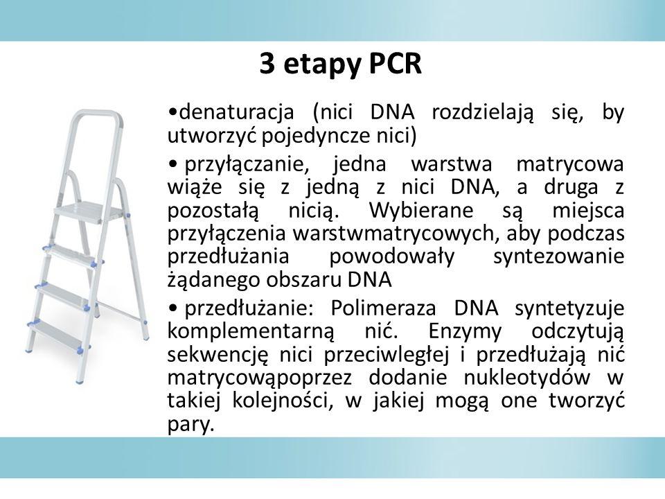 3 etapy PCR denaturacja (nici DNA rozdzielają się, by utworzyć pojedyncze nici)