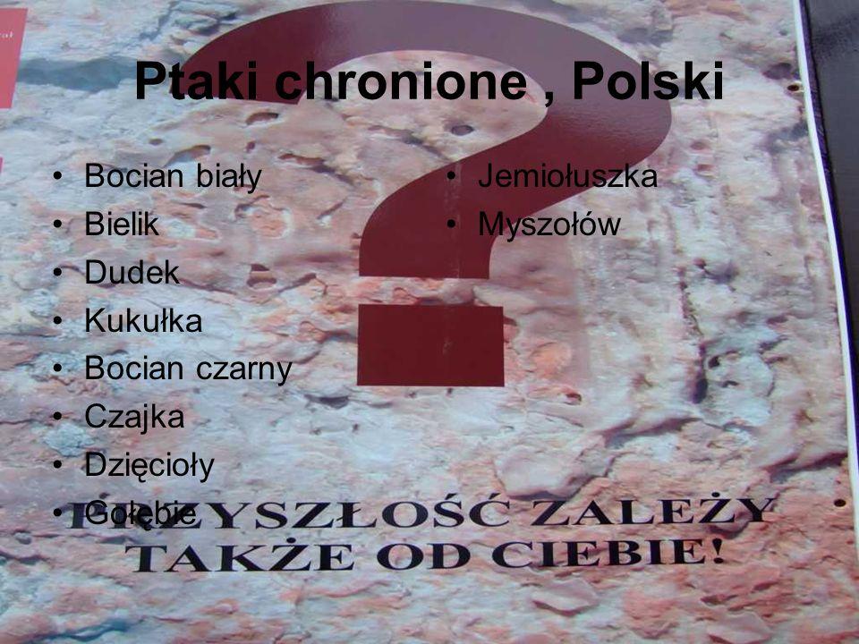 Ptaki chronione , Polski