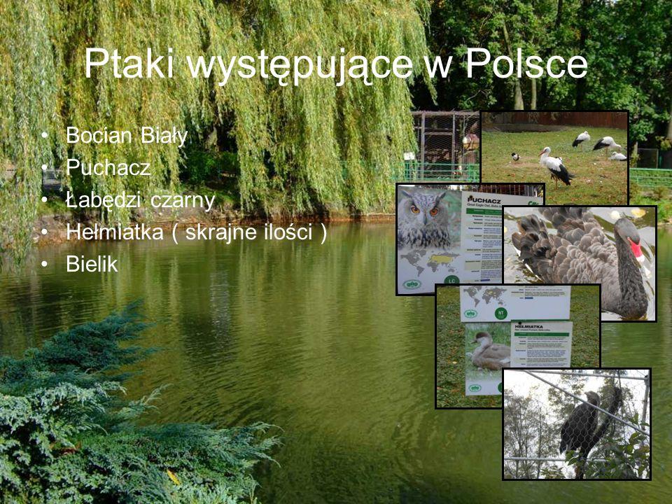 Ptaki występujące w Polsce