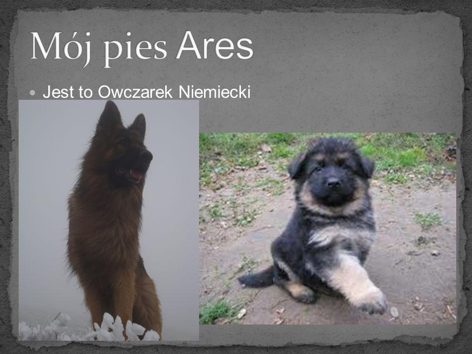 Mój pies Ares Jest to Owczarek Niemiecki