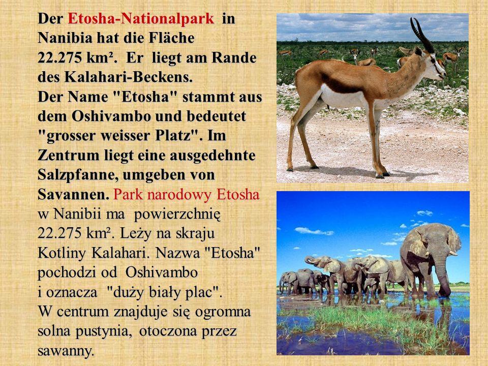 Der Etosha-Nationalpark in Nanibia hat die Fläche 22. 275 km²
