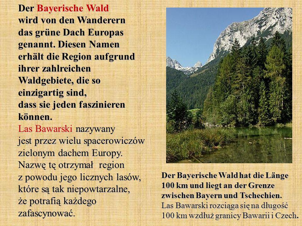 Der Bayerische Wald wird von den Wanderern das grüne Dach Europas genannt. Diesen Namen erhält die Region aufgrund ihrer zahlreichen Waldgebiete, die so einzigartig sind, dass sie jeden faszinieren können. Las Bawarski nazywany jest przez wielu spacerowiczów zielonym dachem Europy. Nazwę tę otrzymał region z powodu jego licznych lasów, które są tak niepowtarzalne, że potrafią każdego zafascynować.