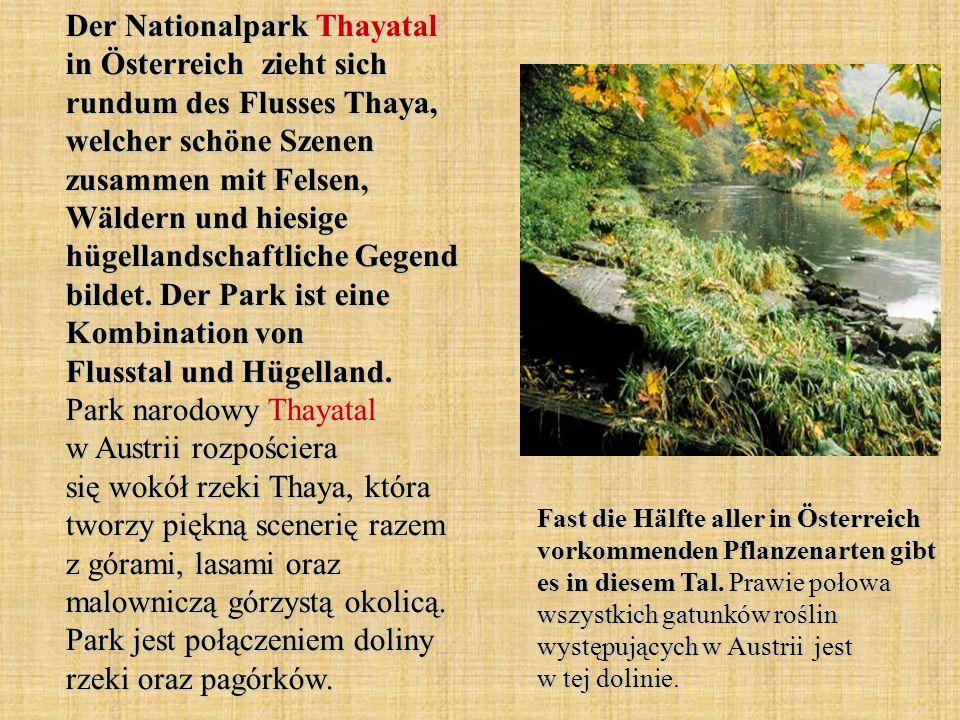 Der Nationalpark Thayatal in Österreich zieht sich rundum des Flusses Thaya, welcher schöne Szenen zusammen mit Felsen, Wäldern und hiesige hügellandschaftliche Gegend bildet. Der Park ist eine Kombination von Flusstal und Hügelland. Park narodowy Thayatal w Austrii rozpościera się wokół rzeki Thaya, która tworzy piękną scenerię razem z górami, lasami oraz malowniczą górzystą okolicą. Park jest połączeniem doliny rzeki oraz pagórków.