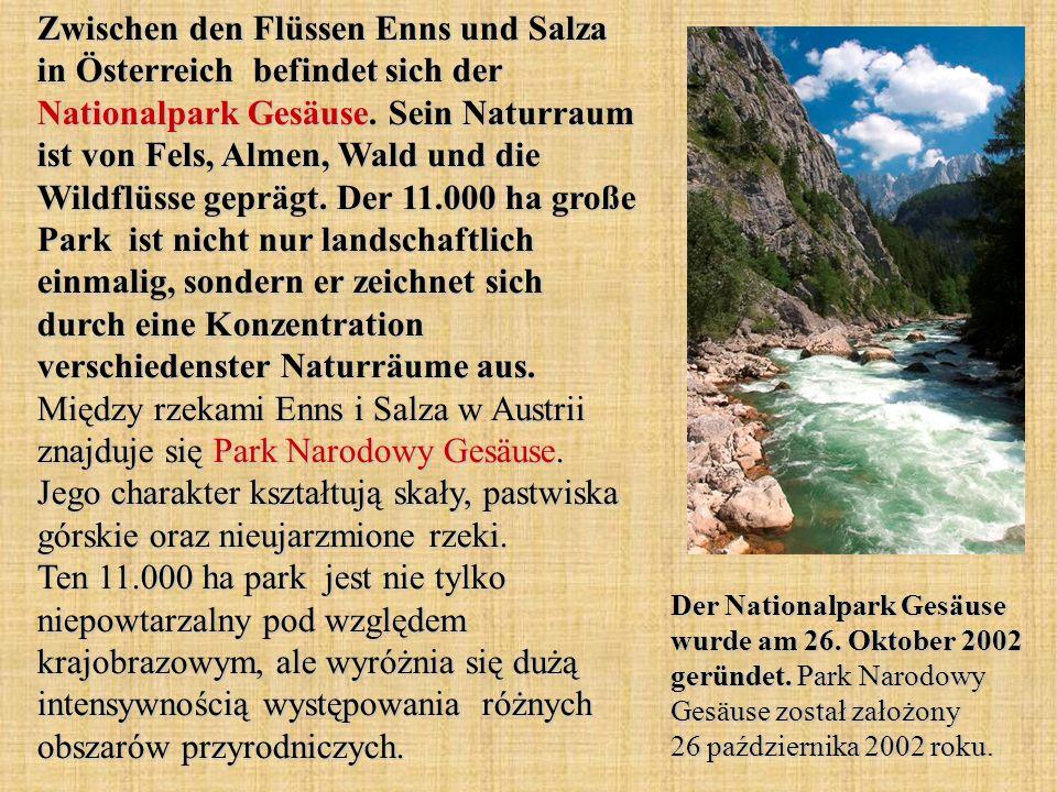 Zwischen den Flüssen Enns und Salza in Österreich befindet sich der Nationalpark Gesäuse. Sein Naturraum ist von Fels, Almen, Wald und die Wildflüsse geprägt. Der 11.000 ha große Park ist nicht nur landschaftlich einmalig, sondern er zeichnet sich durch eine Konzentration verschiedenster Naturräume aus. Między rzekami Enns i Salza w Austrii znajduje się Park Narodowy Gesäuse. Jego charakter kształtują skały, pastwiska górskie oraz nieujarzmione rzeki. Ten 11.000 ha park jest nie tylko niepowtarzalny pod względem krajobrazowym, ale wyróżnia się dużą intensywnością występowania różnych obszarów przyrodniczych.