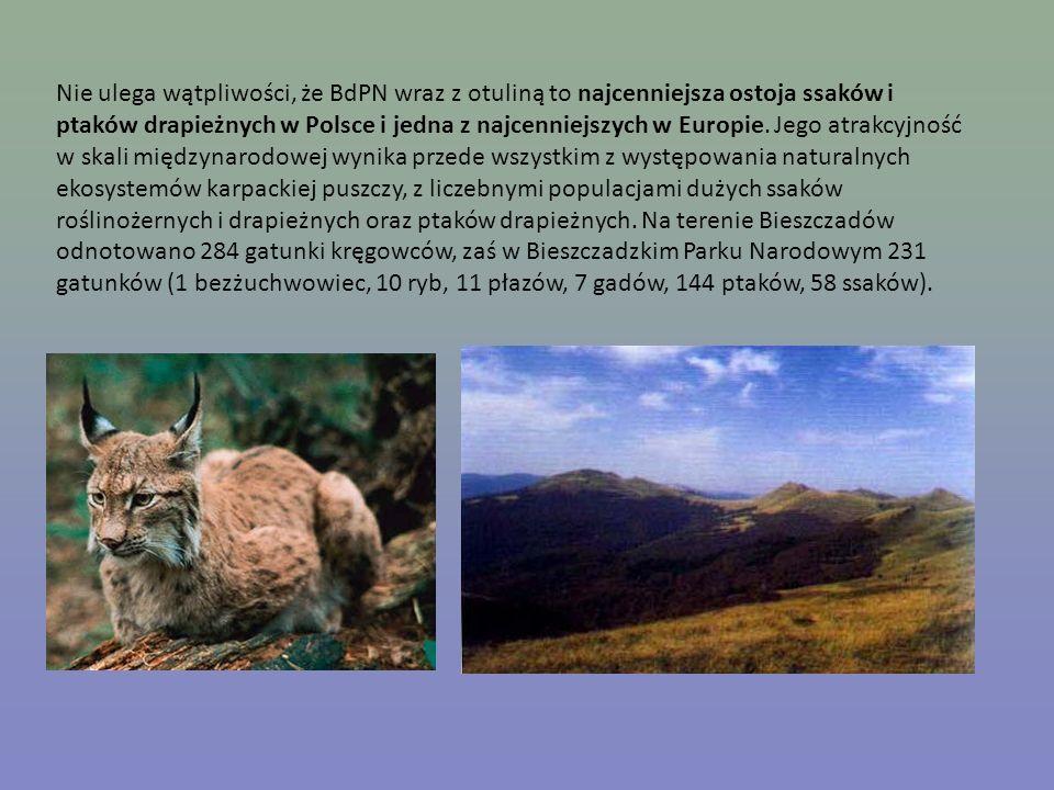 Nie ulega wątpliwości, że BdPN wraz z otuliną to najcenniejsza ostoja ssaków i ptaków drapieżnych w Polsce i jedna z najcenniejszych w Europie.
