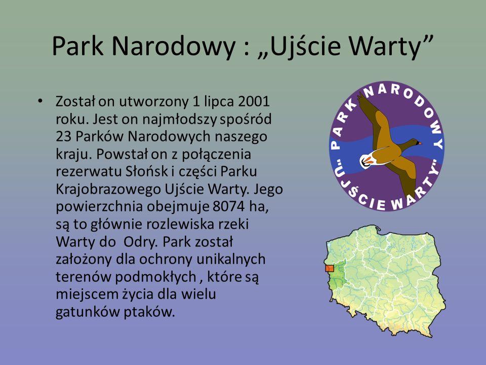 """Park Narodowy : """"Ujście Warty"""